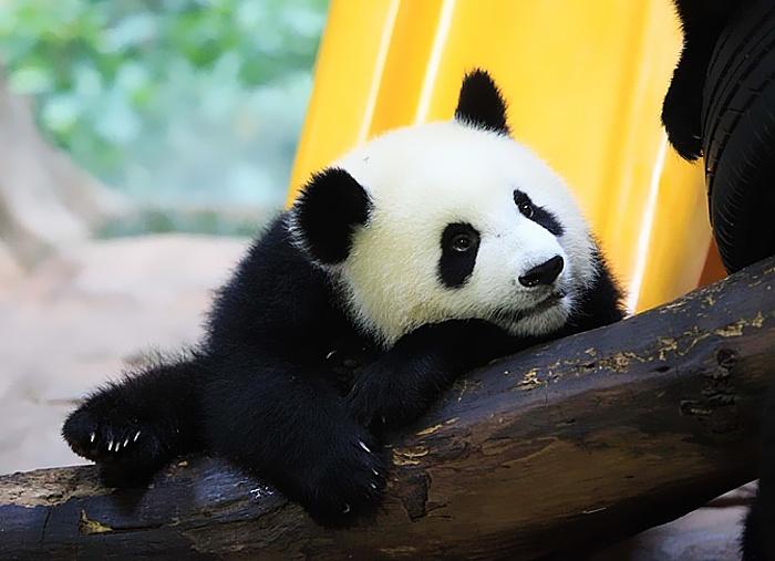 香江动物园+长隆欢乐世界门票套票