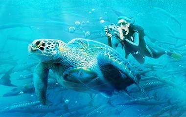 沙巴美人魚島深潛一日遊升級版