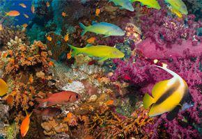 沙巴沙比島浮潛BBQ一日遊