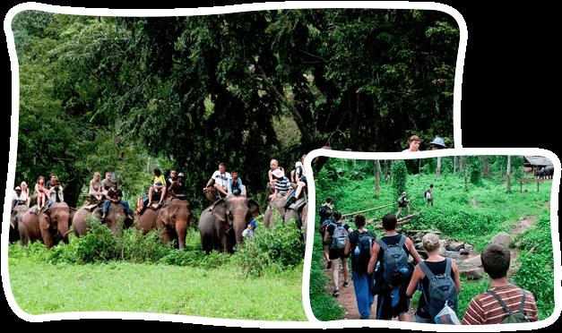 清邁苗人村+騎大象+長頸族徒步 之旅